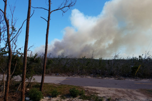 Smoke of the trees