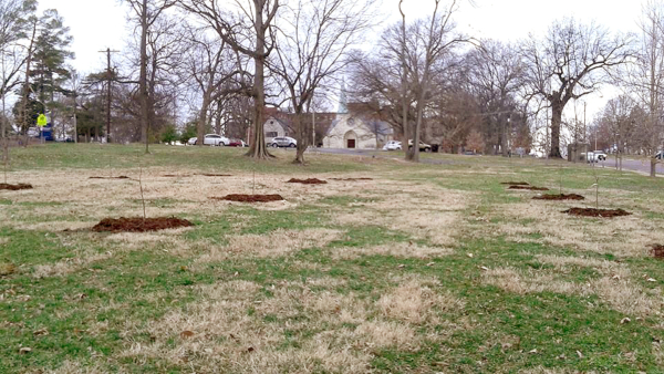 Newly planted orchard